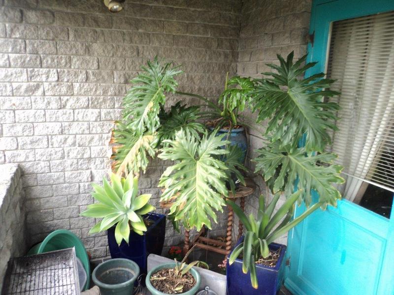 Property For Rent in Chrismar, Bellville 9